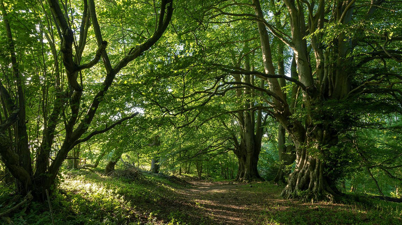 Britains Woodland